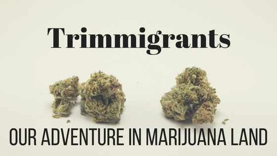 Trimmigrants- Our adventure in Marijuana land