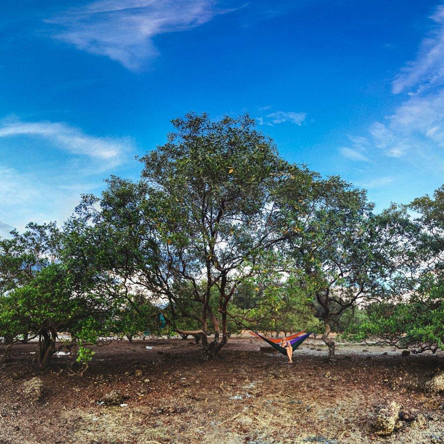 Mangrove Trees in Ao Na Mao Krabi Thailand
