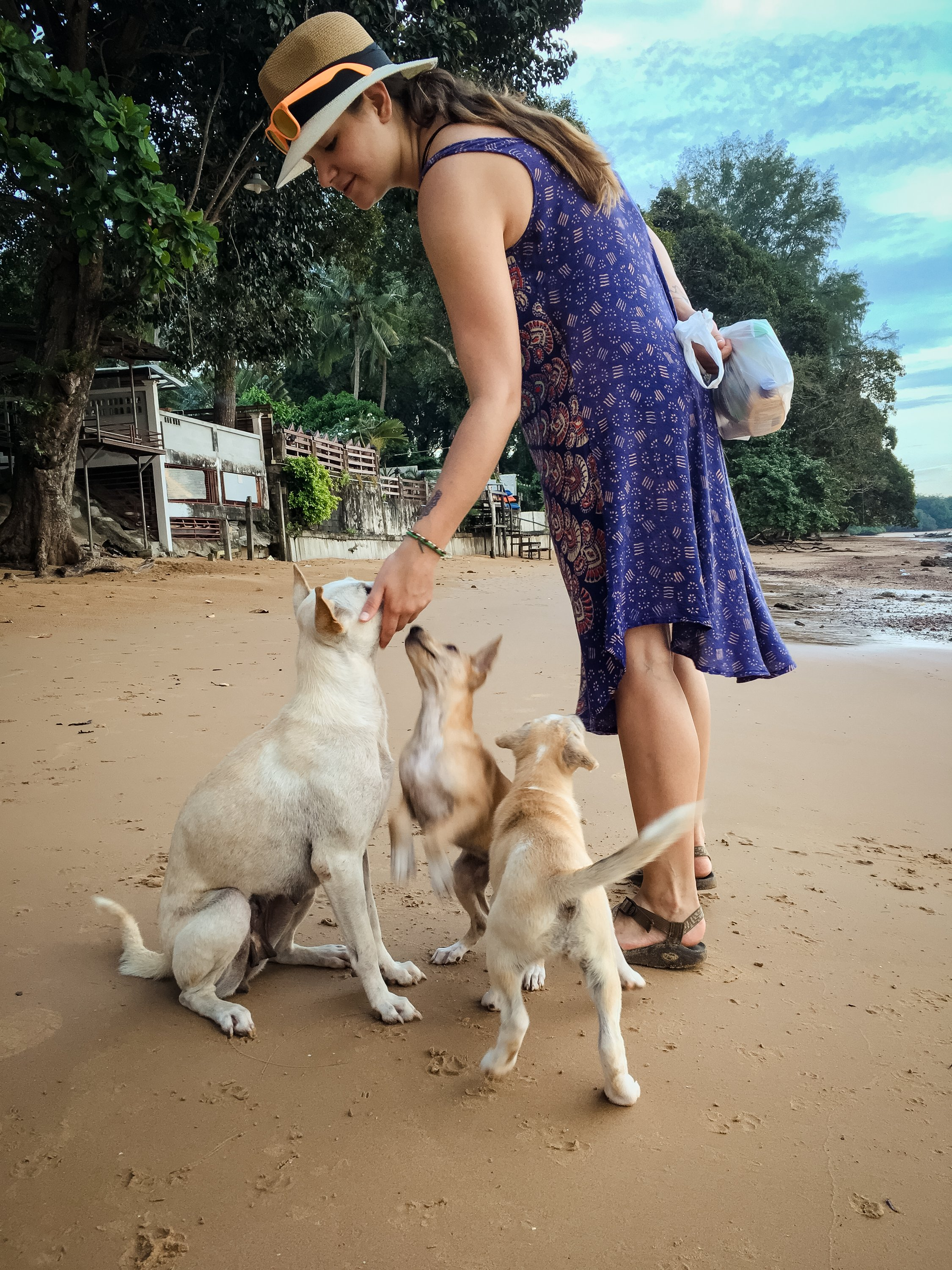 playing with Beach Dogs Krabi Thailand