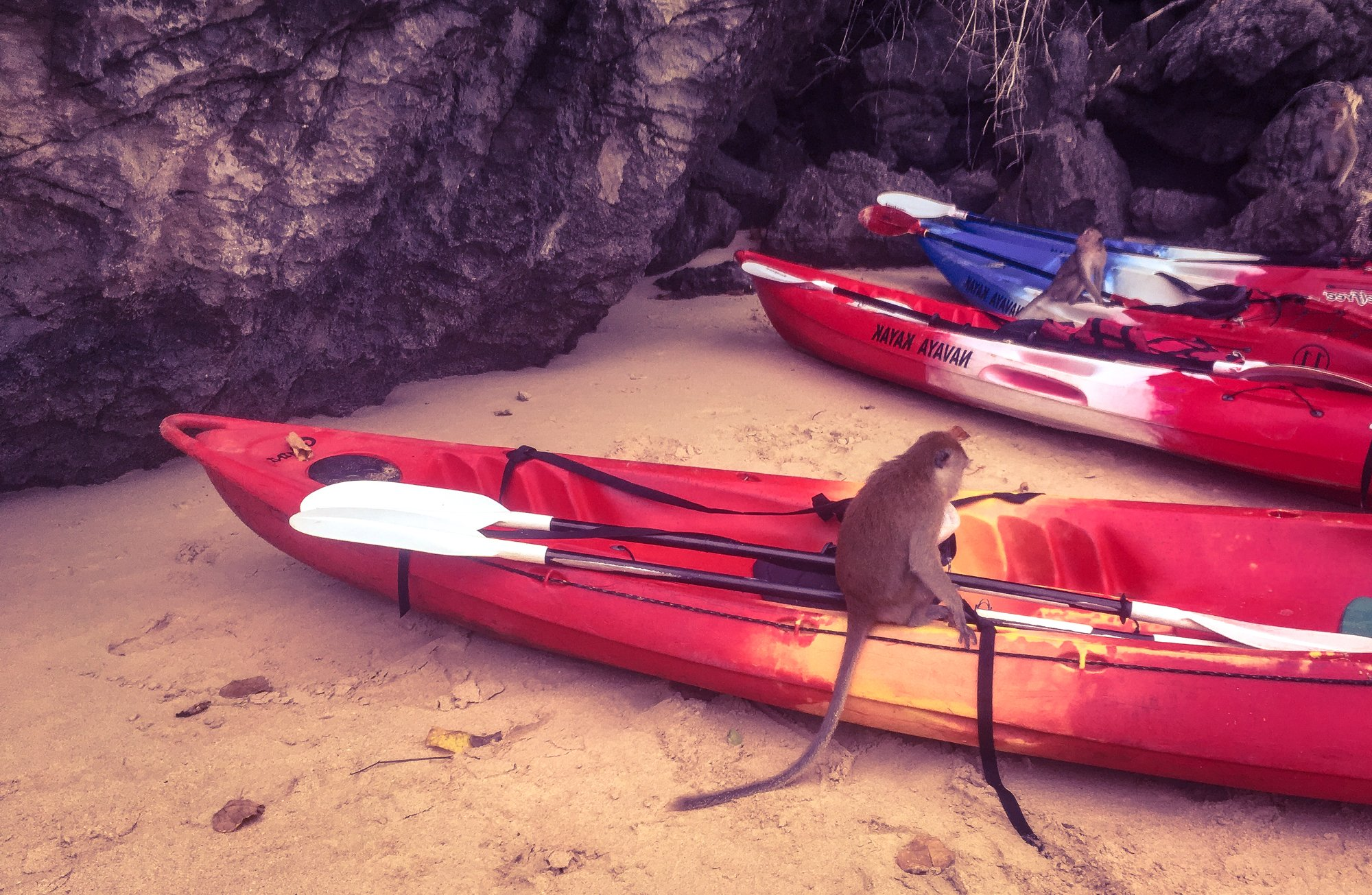 A Monkey sits on our kayak on Railay Beach Thailand