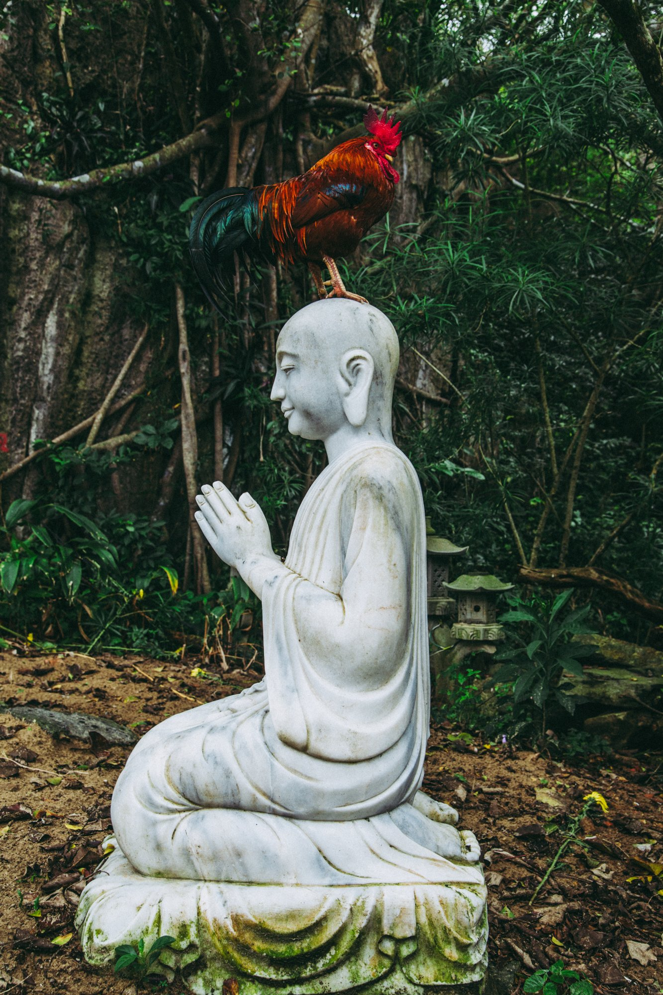 Buddha statue with live chicken on head. Marble Mountain, Vietnam