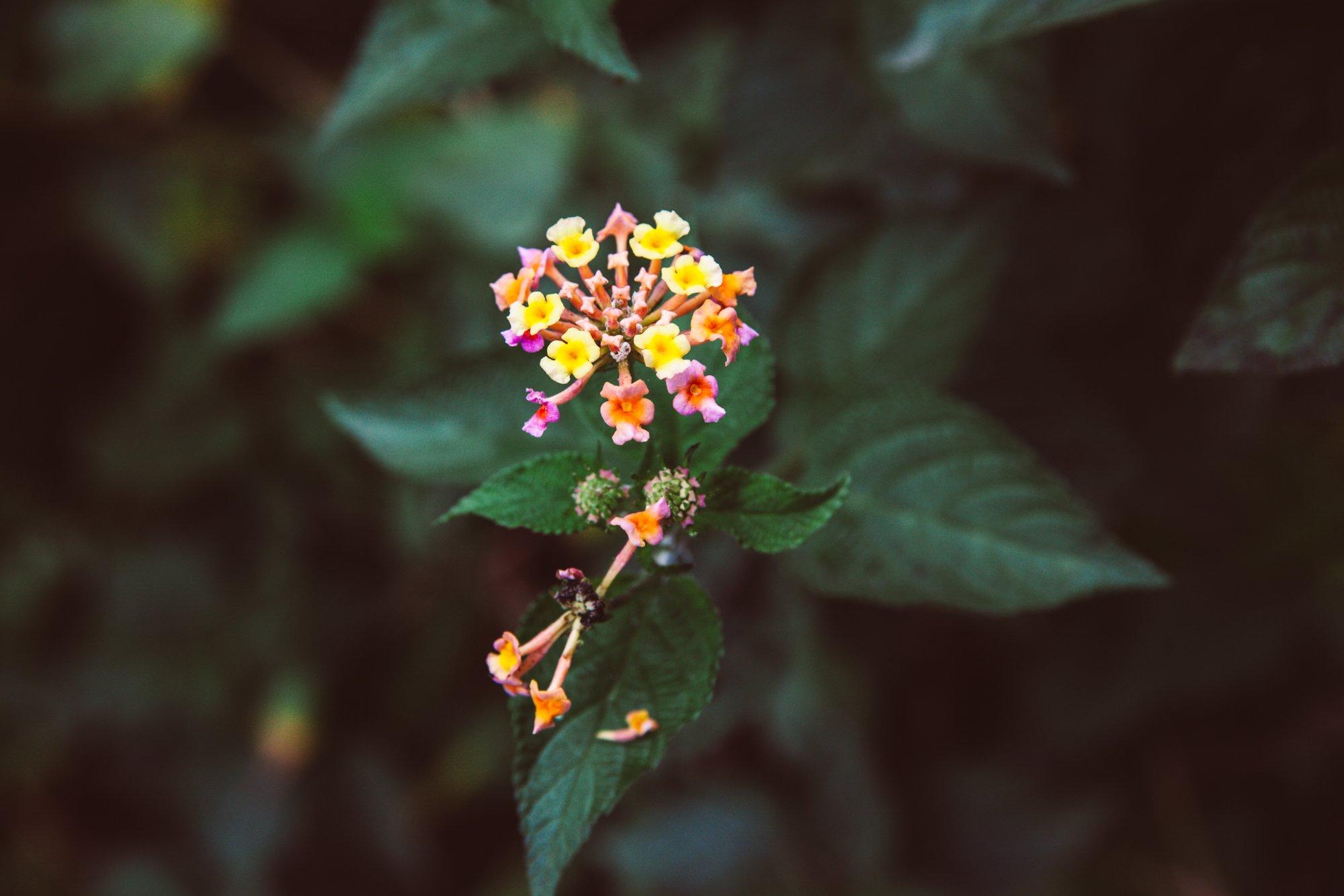 Yellow flowers Marble Mountain Vietnam