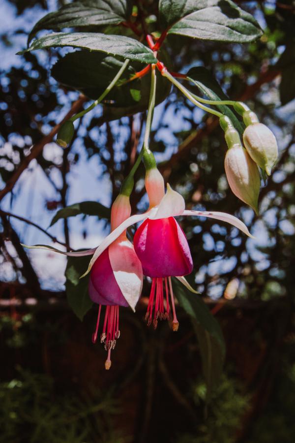 Ba Na Hills Flowers