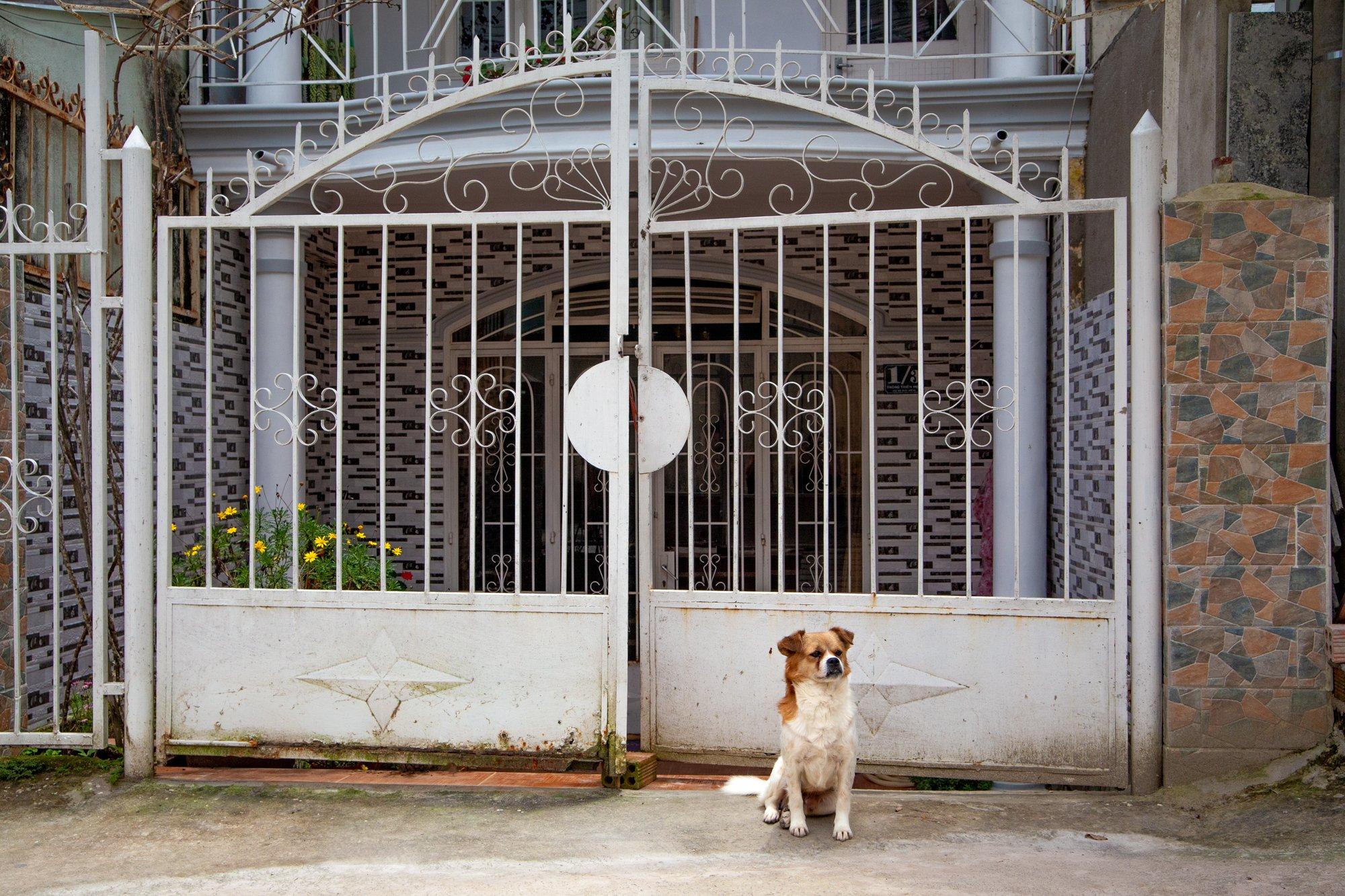 Neighborhood Dog in Dalat Vietnam