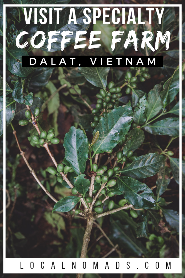 Where does Coffee come from? Visit a Specialty Coffee farm in Dalat