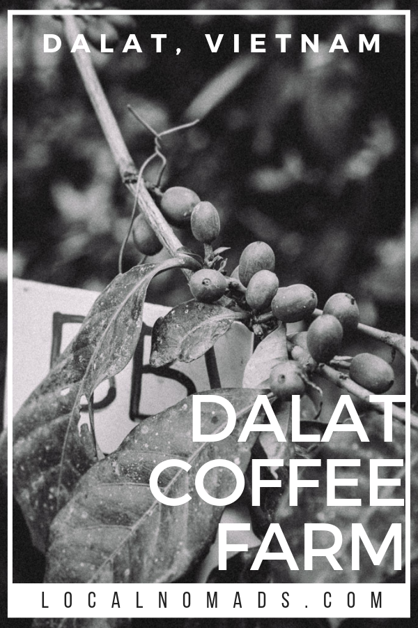 Black and White Pinterest Pin, text says Dalat Coffee Farm, image of coffee cherries