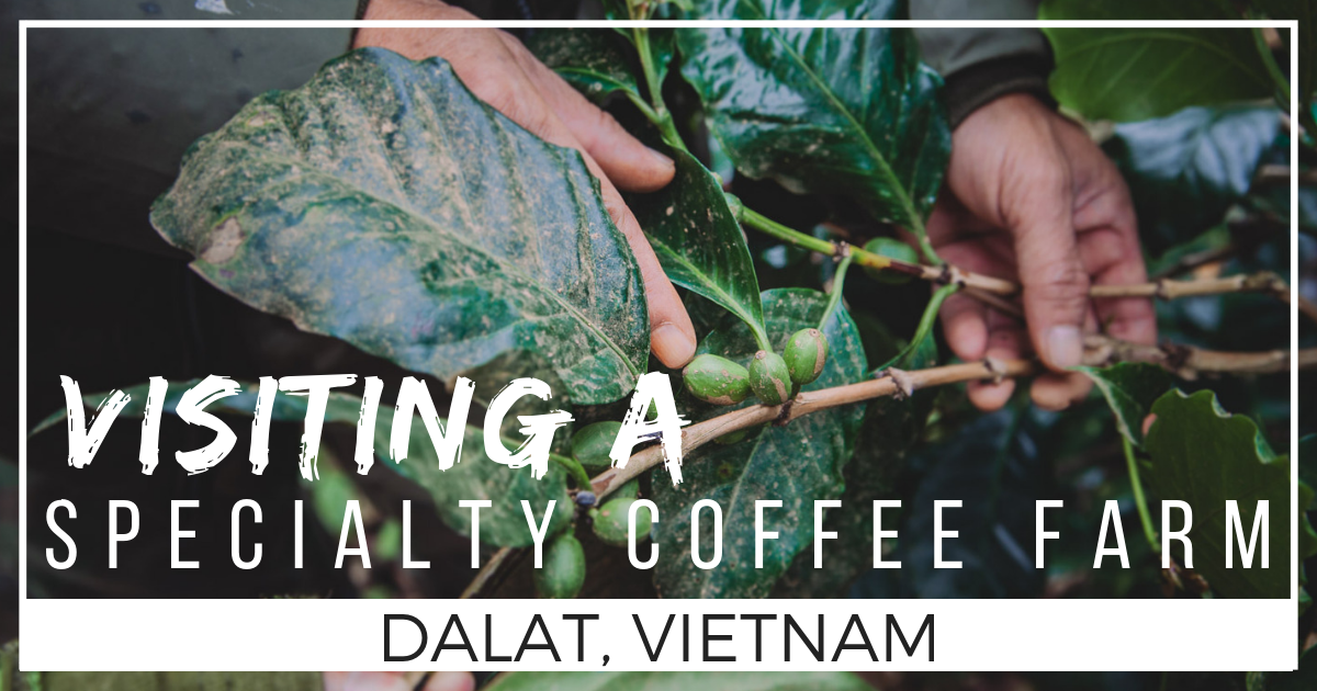 Where does Coffee Come from? Visiting a Dalat Coffee Farm