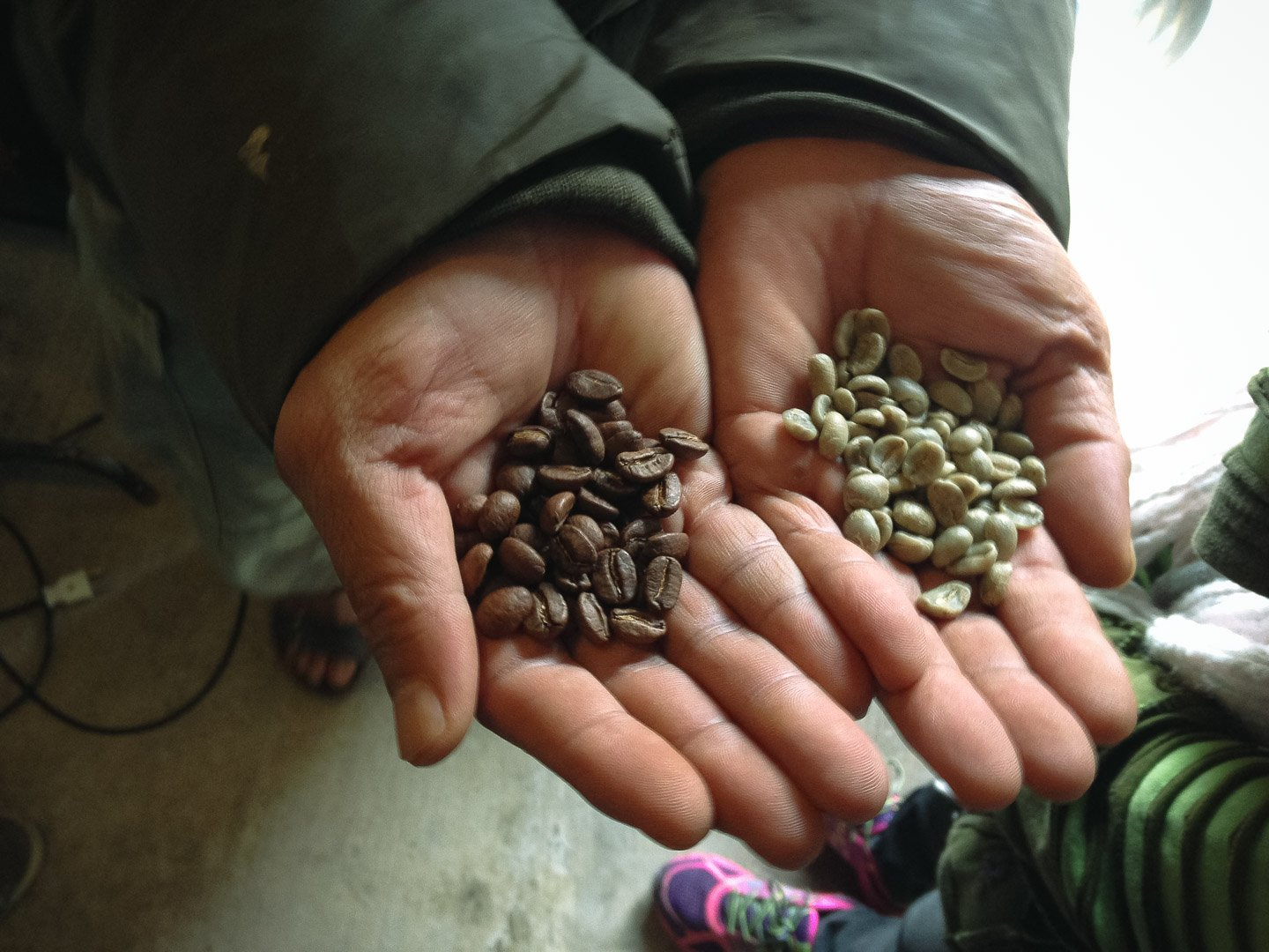 The difference between Green coffee beans and roasted coffee beans