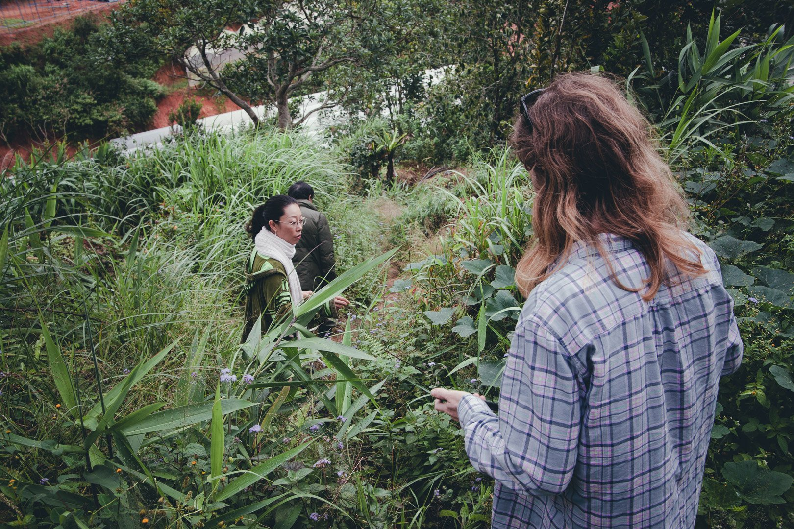 Standing in waist deep greenery on the dalat coffee farm