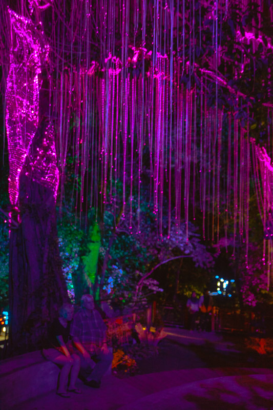 Romantic lights make the Penang Avatar Garden great for couples