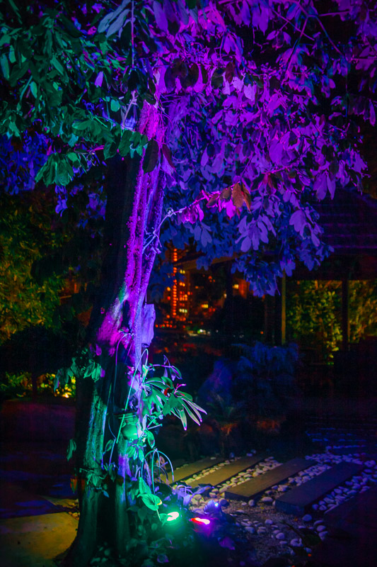 This Tree is Lit! at the Avater Secret Garden Penang