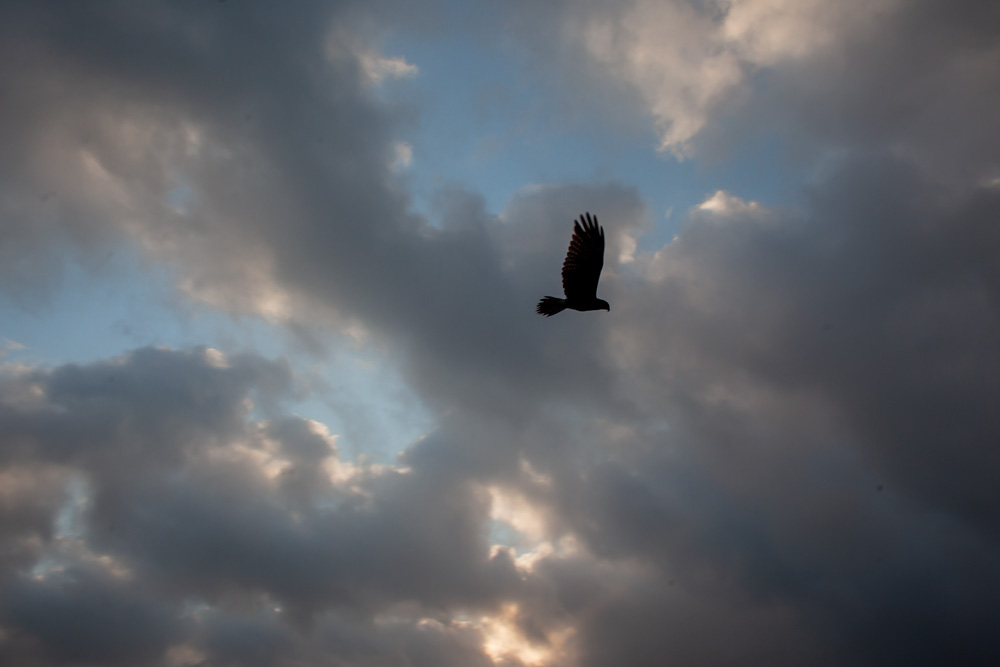 Silhouette of a bird against clouds