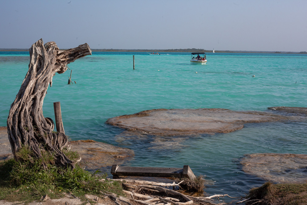 stromatolites and dead tree in Lake Bacalar
