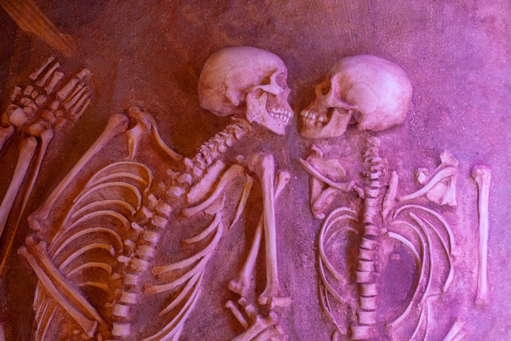 skeleton couple at the anthropology museum