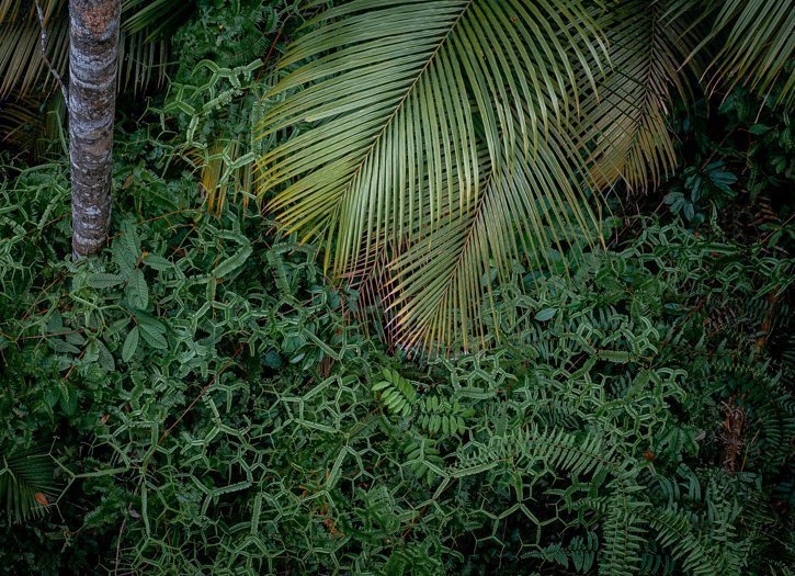 Looking down from the Langur Way Canopy walk at Haxagonal Ferns and palm trees