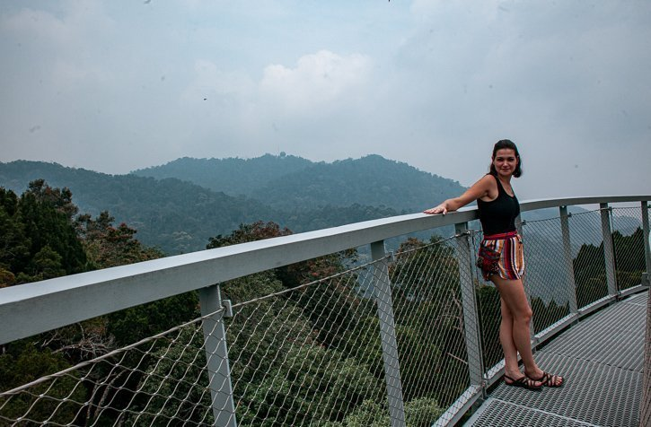 The view from the top of the Curtis Crest Treetop walk at the Habitat in Penang Malaysia
